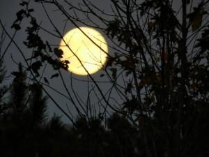 měsíc horoskop srpen